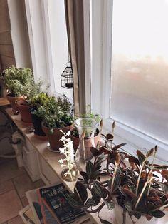Einrichtungsidee für sonnige Fensterbank im Schlafzimmer. #Schlafzimmer #Fensterbank #Einrichtung #Zimmerpflanzen