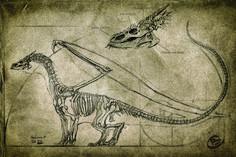 ArtStation - Draconic old manuscripts, Charidimos Bitsakakis Mythical Creatures Art, Magical Creatures, Fantasy Creatures, Old Dragon, Dragon Eye, Dragon Book, Dragon Anatomy, Cool Dragons, Dragon Artwork