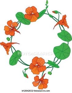 Clipart of nasturtium frame - Search Clip Art, Illustration Murals, Drawings and Vector EPS Graphics Images - Medical Illustration, Illustration Art, Painting Prints, Fine Art Prints, Owl Clip Art, Frame Clipart, Art Icon, Ink In Water, Art Images