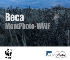 Beca MontPhto - WWF de 6000€ - http://www.aefona.org/beca-montphto-wwf-de-6000e/