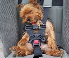 sleepy rider