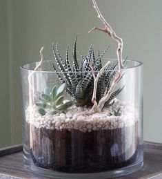 Succulent Terrarium - love the sticks