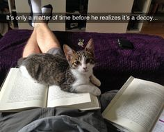 Having a decoy book is actually a great idea when you have a cat. This guy is a genius!