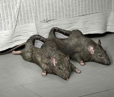 rat slippers!