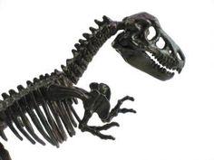 Preschool dinosaur theme for teaching kids.