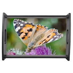 Photography of butterfly in orange and purple serving tray