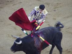 By the time the matador confronts the bull, the animal has been weakened by wounds. It is also been subjected to treatment that weakens it long before it enters the ring, leading one to ask is bullfighting bull farce?