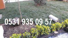 HAZIR RULO ÇİM FİYATLARI İSTANBUL 05319350957: hazır cim satan yerler