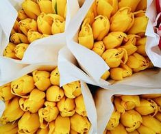 1000+ images about Beautiful flowers on We Heart It | See more about flowers, rose and pink Hair Mask For Growth, Yellow Tulips, Beautiful Flowers, We Heart It, Banana, Exterior, Fruit, Rose, Pink