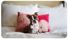 About Adrian Hitt Photography » Dog Photographer Adrian Hitt Commercial Pet Photographer Stock