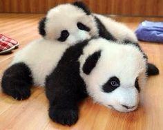 Cuddle panda