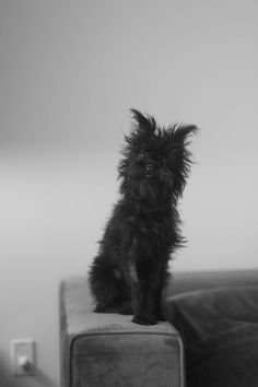 This is an Affenpinscher. So messed up looking and cute!