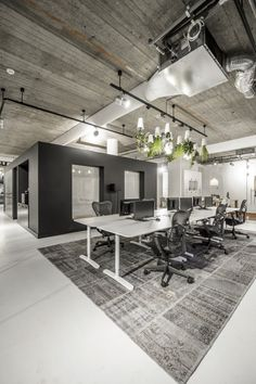 venray's modern office with hanging greenery
