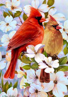 Una pareja de #Cardenales en #FloresDeAzahar;  el de color más vivo es el macho ... http://montanaby.gallery.ru/watch?ph=0sl-eSdet