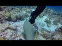 Nurse sharks tangled in fishing line rescued by divers in Puerto Rico #marinedebris #projectaware