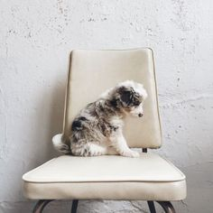 cute dog #dog #animal #crueltyfree www.vainpursuits.com