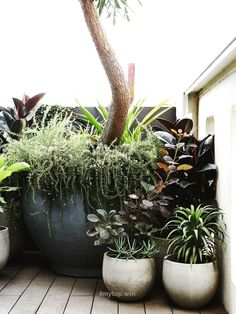 The lush rooftop garden of Owen Harris in Melbourne's Fitzroy is the ultimate …  http://www.4mytop.win/2017/07/15/the-lush-rooftop-garden-of-owen-harris-in-melbournes-fitzroy-is-the-ultimate/
