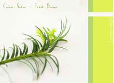 Colour Notes and inspiration � Fresh Blooms