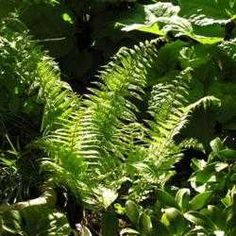Michelle, there are types of ferns that can tolerate full sun light. This article tells you which ones.