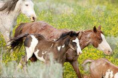 Wild horses on the move | Deborah Kalas Equestrian Photography