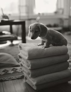 Colby and I want to get another dog, and everything tells me go with Dachsund....especially these super cute pictures!!