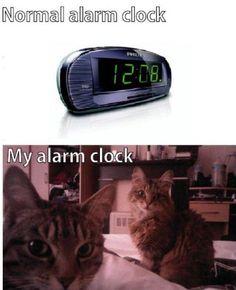 Cat Alarm Clock. So true!