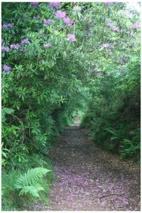 Country Lane in Exmoor National Park, photo (c) Donna Dailey, from http://www.beyond-london-travel.com/Exmoor-National-Park.html
