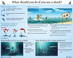 What should you do if you see a shark?