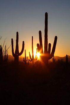 - Short time lapse video of blazing sunset in Arizona desert near Phoenix. Mexico Canada, California Wallpaper, State Of Arizona, Tucson Arizona, Arizona Travel, Arizona Cactus, Landscape Tattoo, Navajo Nation, Summer Sunset