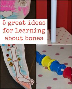 Discover the skeletal system with these hands-on, child-friendly activities.