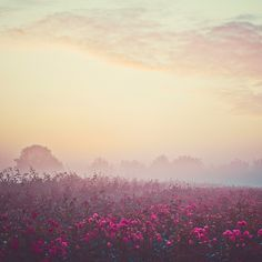 The Mist at sunrise by *Jojanne*, via Flickr