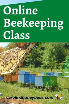 Keeping bees is a favorite pastime of many. Learn how to get started with bees with this online beekeeping class. #carolinahoneybees