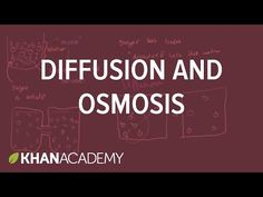 Diffusion and Osmosis - Difference and Comparison | Diffen