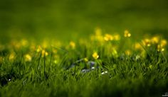 Обои на рабочий стол: весенние обои, весна, зелень, летние обои, лето, макро обои для рабочего стола, природа, свежесть, трава, травинка, травинки, травка, цветы