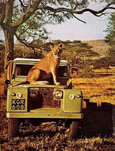 What Land Rover's were designed for...