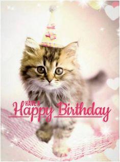 Cat Happy Birthday Meme Wishes Cats Memes