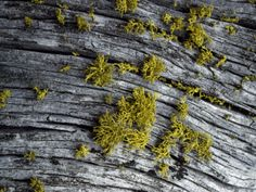 LICHEN By Jeff Foott. Photographic print from Art.com.