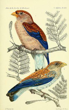 Wildlife of Senegal and Gambia, Faune de la Sénégambie /. Paris :O. Doin,1883-1887..