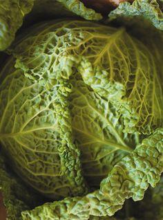 Stuffed Cabbage with Three Cheese Recipes Pickled Cabbage, Cabbage Soup, Cabbage Rolls Recipe, Cabbage Recipes, Bulgogi, Korma, Quick Kimchi, Macaroni Casserole, Confort Food