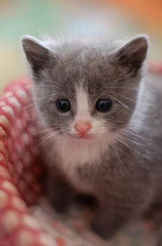 Community Post: 33 Utterly Adorable Photos Of Itty Bitty Foster Kitties