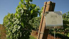 España inventa un vino aún más beneficioso para la salud