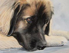 "Hundeportrait Leonberger ""Paul"", Pastellkreide - Tierportrait nach Fotovorlage von Simone Hofmann - www.simone-hofmann.com - Dog painting"