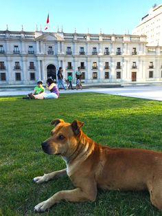 We quickly learned that dogs are the unofficial mascot of Santiago. They are a very common sight throughout Santiago... in streets, parks, plazas, markets, metro stations... you name it.