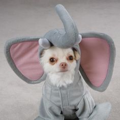 The chihuahua elephant! Louie needs this custom for some gamedays. Halloween 2018, Dog Halloween Costumes, Pet Costumes, Halloween Puppy, Costume Ideas, Animals For Kids, Baby Animals, Funny Animals, Cute Animals