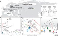 Dogs were the first domesticated animal, likely originating from human-associated wolves, but their origin remains unclear. Bergstrom et al. sequenced 27 ancient dog genomes from multiple locations near to and corresponding in time to comparable human ancient DNA sites (see the Perspective by Pavlidis and Somel). By analyzing these genomes, along with other ancient and modern dog genomes, the authors found that dogs likely arose once from a now-extinct wolf population. They also found that at le Wolf Population, Genome Sequencing, Chinese Dog, Hunter Gatherer, Different Dogs, Old Dogs, Prehistoric, Genetics