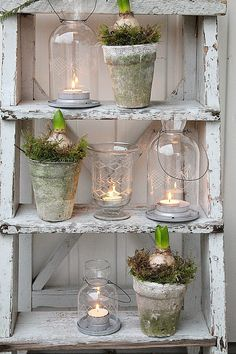VIBEKE DESIGN rustic farmhouse decor for holidays christmas with bulb flowers , spring flowers in pots, styling home Decoration Shabby, Shabby Chic Decor, Christmas Porch, Christmas Decorations, Table Decorations, Christmas Garden, White Christmas, Christmas Crafts, Deco Champetre
