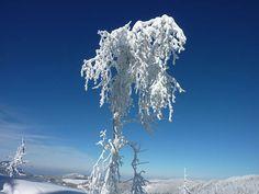 7 Tipps für eine Winterwoche im Schwarzwald beim Feldberg
