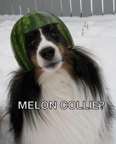 Funny pictures about Melon collie? Oh, and cool pics about Melon collie? Also, Melon collie? Haha Funny, Funny Cute, Funny Dogs, Funny Animals, Cute Animals, Funny Stuff, That's Hilarious, 9gag Funny, Art Adventure Time