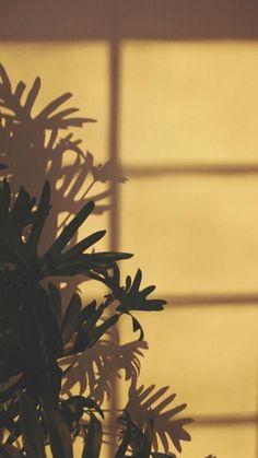 New News Amarillo Aesthetic Wallpaper : Login Amarillo Aesthetic Wallpaper Login - Истории Plant Wallpaper, Flower Wallpaper, Screen Wallpaper, Mobile Wallpaper, Wallpaper Backgrounds, Wallpaper Quotes, Vintage Backgrounds, Emoji Wallpaper, Retro Wallpaper