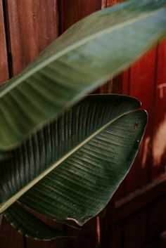 House Plant Care, House Plants, Hawaii Vacation, Tropical Paradise, Trip Planning, Oasis, Travel Inspiration, Plant Leaves, How Are You Feeling